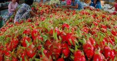 Xuất khẩu rau quả: Chế biến sâu để hướng đến thị trường xa