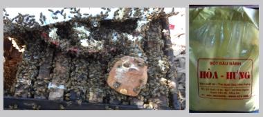 Trại ong mật Hân Hòa Hưng: mô hình kinh tế hiệu quả