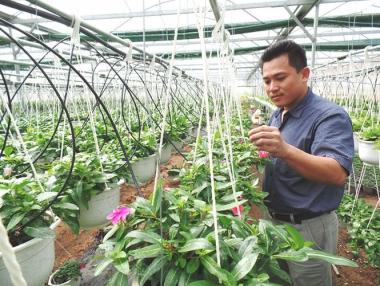 Tự tạo cơ hội: 'Chuyên gia' hạt giống về trồng hoa treo