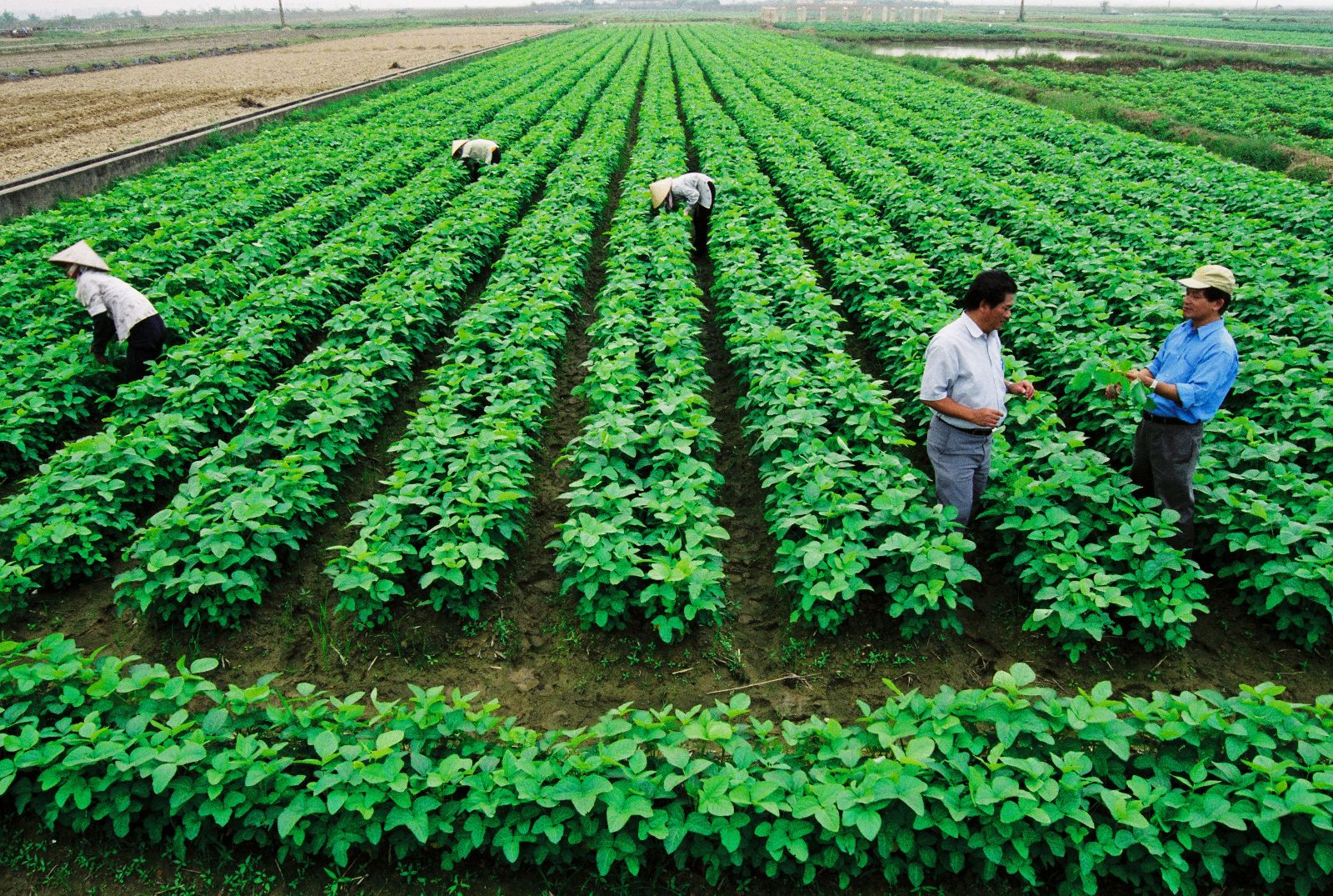 """Doanh nghiệp nông nghiệp vẫn """"èo uột"""""""