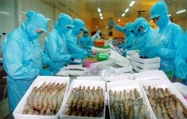 Cấm nhập tôm và thịt tôm chưa được nấu chín vào Australia