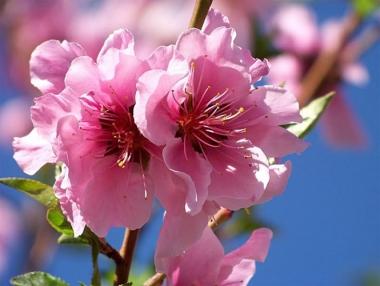 Hoa không chỉ đẹp mà còn chữa bệnh