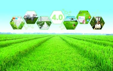 Bức tranh nông nghiệp năm 2019, định hướng phát triển 2020