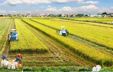 Hoàn thiện chính sách khuyến khích doanh nghiệp đầu tư vào nông nghiệp, nông thôn