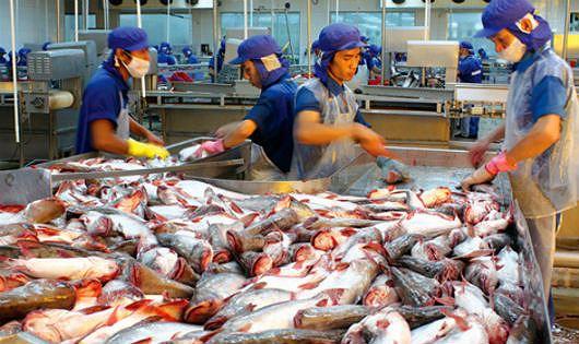 Việt Nam kiến nghị với WTO về việc Mỹ hạn chế nhập khẩu cá da trơn