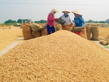 Thủ tướng chỉ đạo Bộ Tài chính mua dự trữ 200.000 tấn gạo và 80.000 tấn thóc