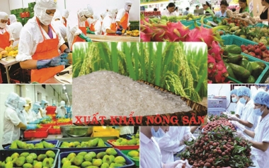 Tháng 1/2020: Xuất khẩu nông, lâm, thủy sản giảm mạnh