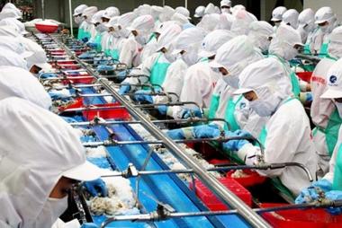 Hoa Kỳ điều tra hành vi lẩn tránh thuế đối với sản phẩm tôm xuất khẩu Việt Nam