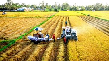 Đến năm 2025, xuất khẩu khoảng 5 triệu tấn gạo