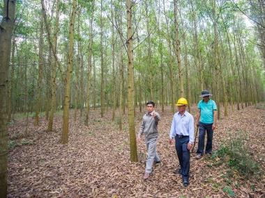 WB hỗ trợ trồng rừng bền vững tại Việt Nam