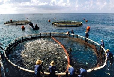 Nguy cơ phá vỡ quy hoạch nuôi trồng thủy sản vùng ĐBSCL do xâm nhập mặn