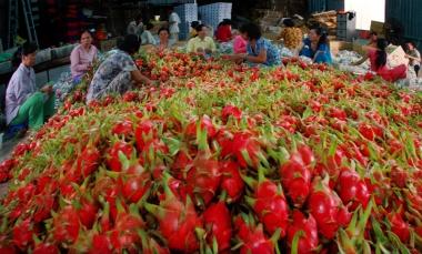 Xuất khẩu rau quả sang EU: Cảnh báo tăng tần suất kiểm tra