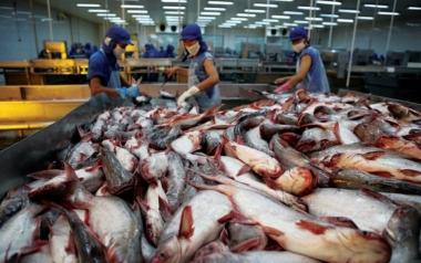 VASEP xem xét khởi kiện Hoa Kỳ trước thông tin bán phá giá cá tra
