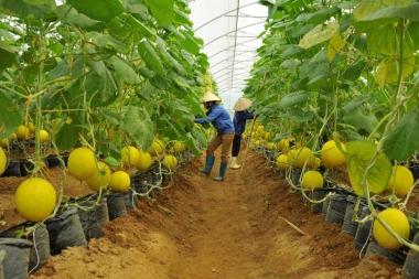 Agribank tiếp sức nông sản Việt vươn ra thế giới