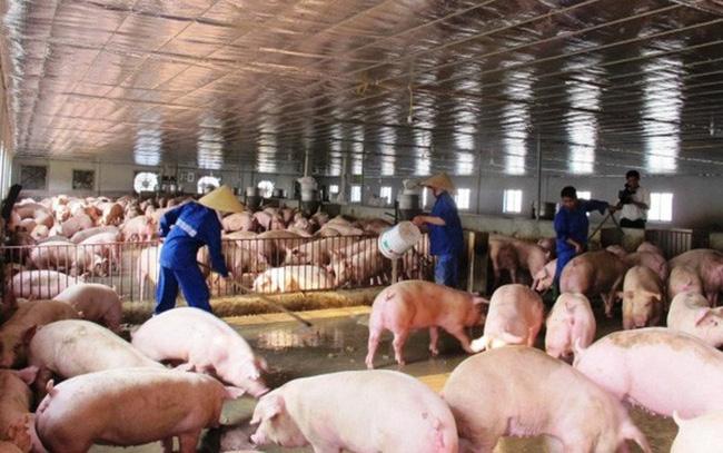 Phối hợp chặt chẽ giữa các cơ quan chức năng ngăn ngừa vận chuyển lợn nhập lậu