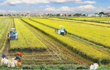 3 nhiệm vụ trọng tâm trong thực hiện Nghị quyết TW7 về nông nghiệp, nông dân, nông thôn