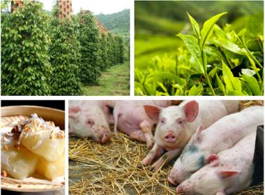 Sản xuất nông, lâm nghiệp và thủy sản ổn định