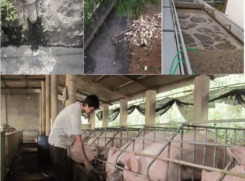Vi phạm quy định về xử lý chất thải chăn nuôi bị phạt như thế nào?