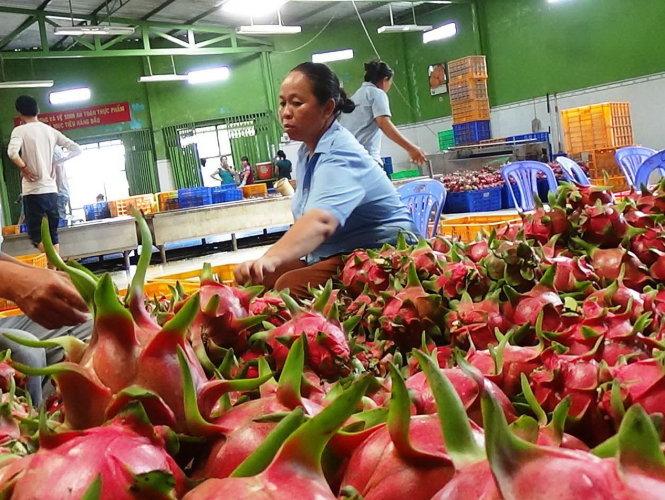 UAE tiếp tục là thị trường tiềm năng đối với doanh nghiệp Việt Nam
