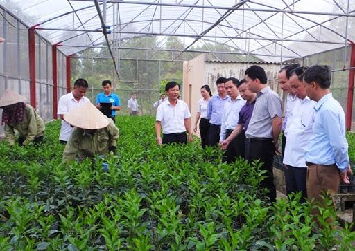 Sản xuất, kinh doanh giống cây trồng lâm nghiệp cần những điều kiện gì?