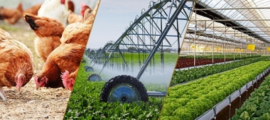 Sản xuất nông, lâm nghiệp và thủy sản trong điều kiện thuận lợi