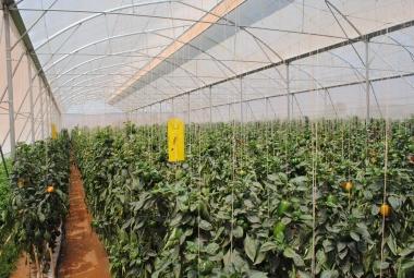 Trở thành tỉ phú nhờ đầu tư trồng rau sạch