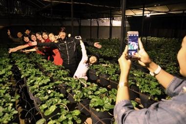 Cận cảnh du lịch tại vườn dâu tây ở Đà Lạt