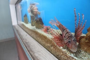 Khám phá Viện Hải dương học Nha Trang