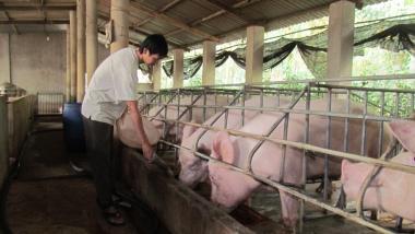 5 giải pháp cấp bách ổn định ngành chăn nuôi