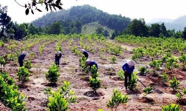 Năm 2019, phải đưa tỷ lệ che phủ rừng toàn quốc đạt 41,85%
