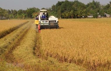 Quý I/2020: Sản xuất nông, lâm nghiệp và thủy sản đang đối diện với nhiều khó khăn, thách thức