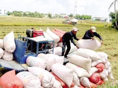 Quản lý, kiểm soát số lượng gạo được phép xuất khẩu