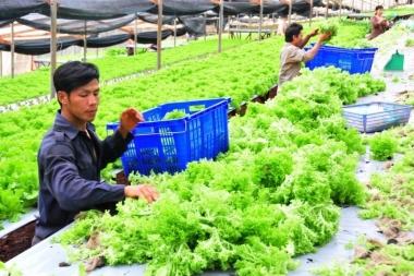 Nông nghiệp thông minh với lợi thế sản xuất khép kín ngày nay