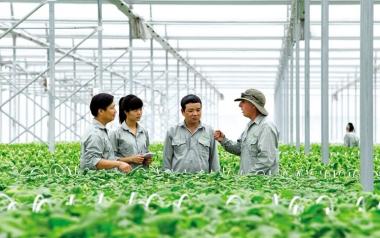 Năm 2020: TP.Hồ Chí Minh sẽ phát triển mới 35 hợp tác xã