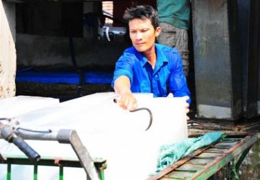 Hiệu quả từ THT thanh niên ở huyện Vạn Ninh (Khánh Hòa)