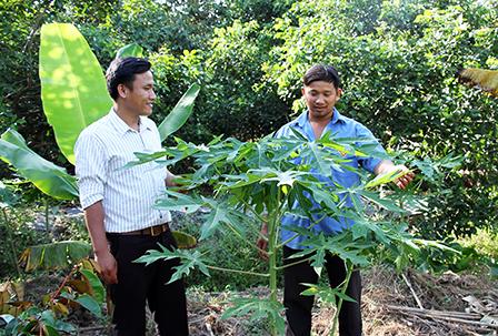 Xã Tân Thới (Cần Thơ) với mô hình THT thanh niên trồng trọt, chăn nuôi