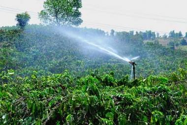 Việt Nam hướng tới mô hình sản xuất cà phê cần ít nước tưới