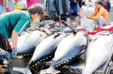 Muốn xuất khẩu cá ngừ, phải đáp ứng nhiều quy định khắt khe