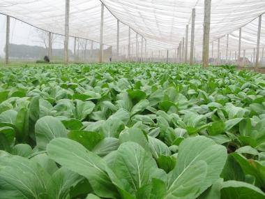 Tăng cường xử lý vi phạm an toàn thực phẩm trên địa bàn Hà Nội