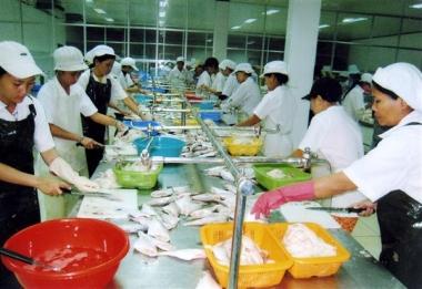 EU cảnh báo thủy sản có kháng sinh, cá chết bất thường của Việt Nam