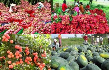 13 doanh nghiệp nhập khẩu trái cây của UAE có dấu hiệu lừa đảo