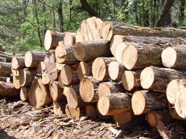 Ngành Gỗ Việt Nam cam kết nói không với gỗ bất hợp pháp