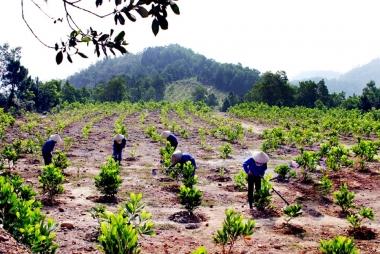 Việc triển khai các dự án bảo vệ và phát triển rừng cần được khoán ổn định cho người dân