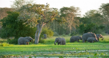 Chung tay cho một thập kỷ phục hồi hệ sinh thái