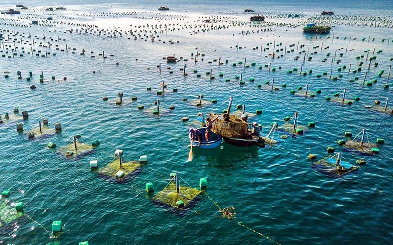 Xuất khẩu thủy sản Việt Nam có cơ hội hưởng lợi