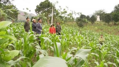 Trợ cấp gạo trồng rừng thay thế nương rẫy tối đa là 7 năm