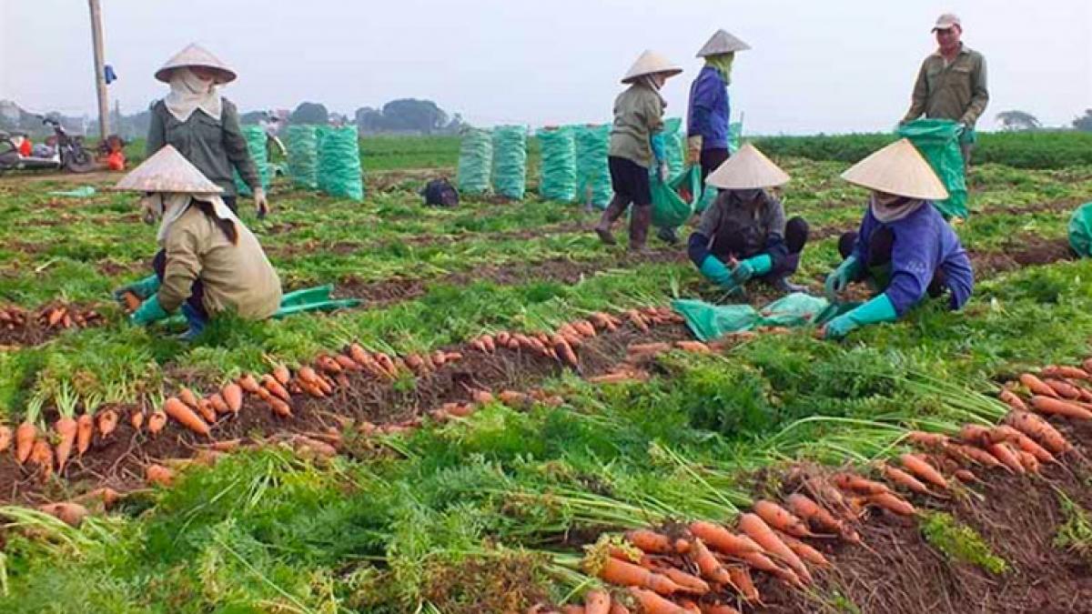 Lưu thông dòng chảy cho tiêu thụ nông sản trong bối cảnh dịch Covid-19