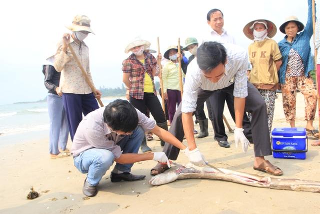 Vụ cá chết ở biển miền Trung: Nguyên nhân đã có, song vẫn phải chờ kết luận