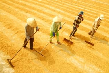 Tính chuyện đường dài cho hạt gạo Việt