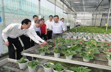 Cần bổ sung chính sách phát triển giống cây trồng mới